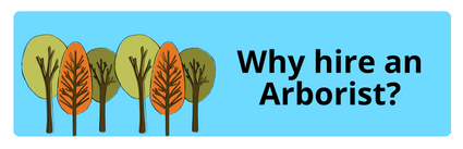 http://winnebago.uwex.edu/files/2010/05/Why-hire-an-arborist-website2.pdf